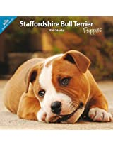 Staffordshire Bull Terrier Puppies 2014 Wall Calendar