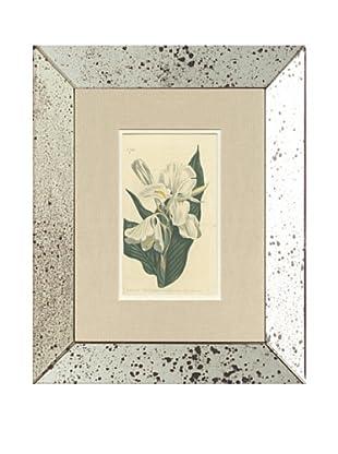 1803 Antique Hand Colored White Botanical, Mirror Frame