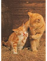 Creative Toy Company Cork Puzzles Ginger Cats 500 Piece Puzzle By Clementoni