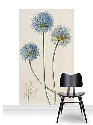 Royal Horticultural Society Allium Caeruleum Mural (Accent)