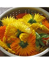 Flora Fields Calendula (Pot Marigold) - Art Shades