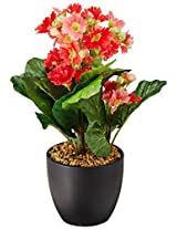 Fourwalls Premium Range Primula Flowers in a Ceramic Vase (32 cm, Red)