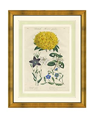 1837 Antique Hand Colored Yellow Botanical Print VII, French Mat
