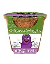 Dunecraft Eggplant Organic Veggies Science Kit