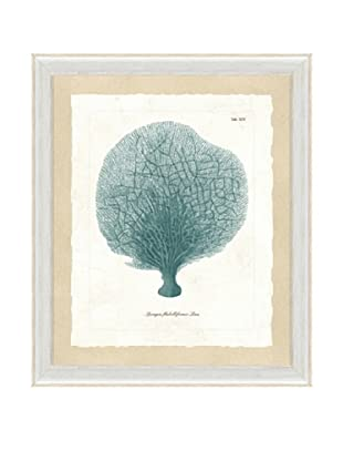 Teal Sea Fan Framed Print I