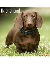 Dachshund 2015 (Square Wirestitched)