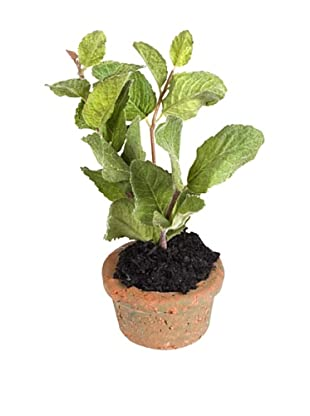 New Growth Designs Mint Spray Mini-Pot