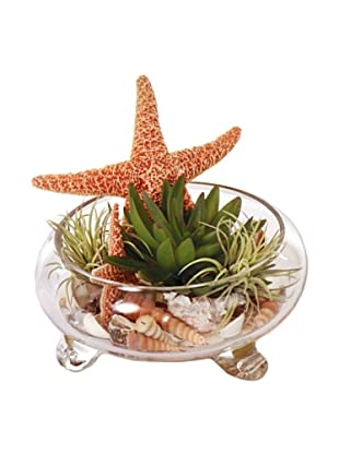 Lux-Art Silks Footed Bowl with Starfish & Succulents Waterlike, Beige/Green