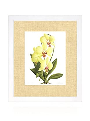 Orchid IV, White/Bamboo
