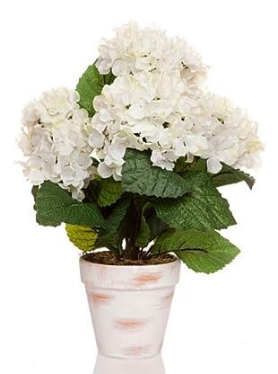 Concoral Maceta Hortensia Crema