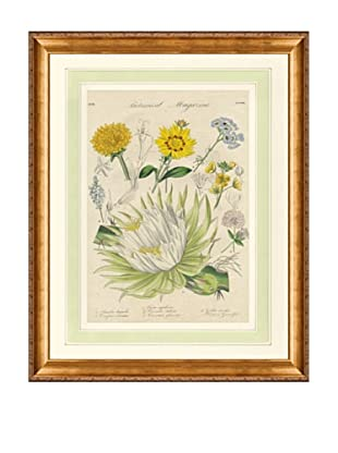 1837 Antique Hand Colored Yellow Botanical Print XI, French Mat