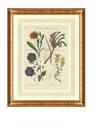1837 Antique Hand Colored Orange Botanical Print, French Mat