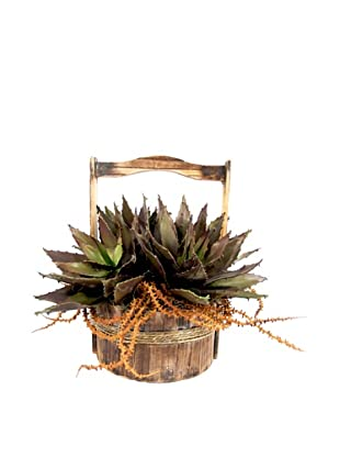 Creative Displays Succulents In Wooden Basket
