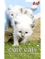 cute cats10 Birman