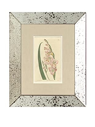 1813 Antique Hand Colored Pink Botanical IV, Mirror Frame