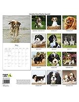Cavalier King Charles Spaniel 2014 Wall Calendar