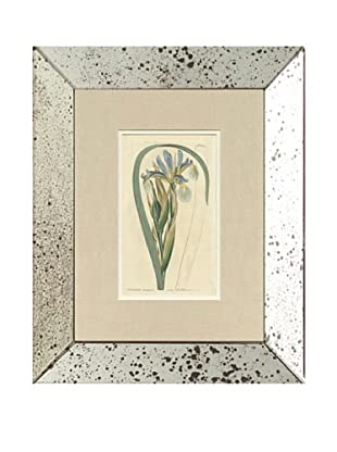 1812 Antique Hand Colored Blue Botanical, Mirror Frame
