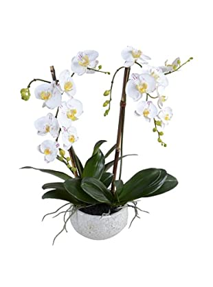 New Growth Designs Faux Phalaenopsis Hanging Orchid, White/Purple