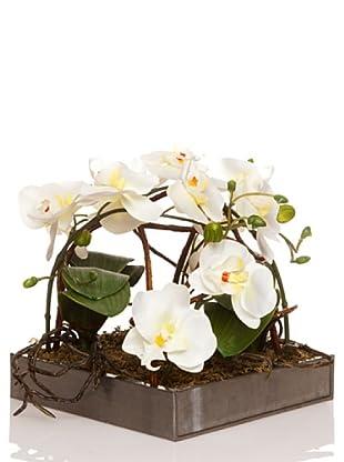 Concoral Composición Orquídea Crema