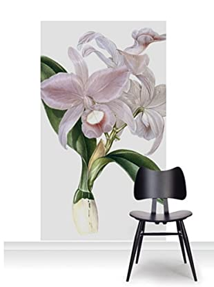 Victoria and Albert Museum Orchid, Cattelya Skinerii Mural (Accent)