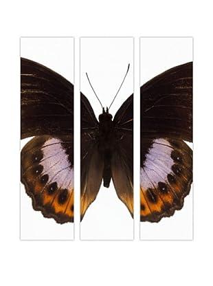 Art Addiction Acrylic Printed Butterfly Set II, Triptych