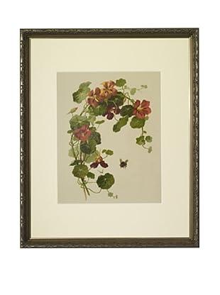 1880s Nasturtiums Floral Spray