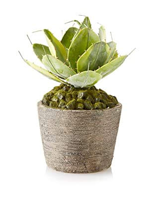Winward Potted Lotus Succulent, Green