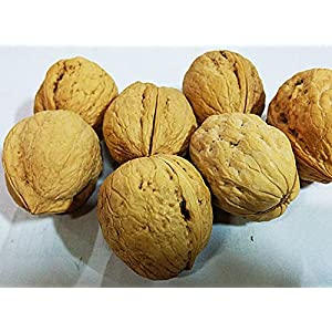 WALNUT WHOLE-500GMS - DryFruitBasket