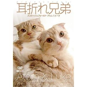 耳折れ兄弟 スコティッシュフォールド・アトム&ルーク [DVD]
