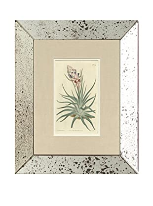 1813 Antique Hand Colored Pink Botanical, Mirror Frame