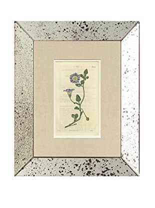 1825 Antique Hand Colored Lavender Botanical, Mirror Frame