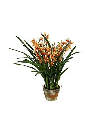 Winward Pot Cymbidium, Yellow/Brown