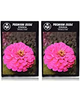 PBC Zinnia Double Pink Premium Seeds - Pack of 2 (200 Seeds)
