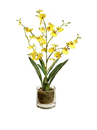 Winward Oncidium in 16'' Urn (Yellow)