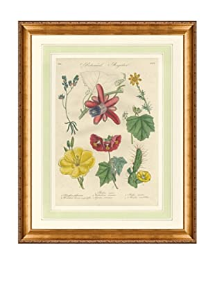 1837 Antique Hand Colored Red Botanical Print VIII, French Mat