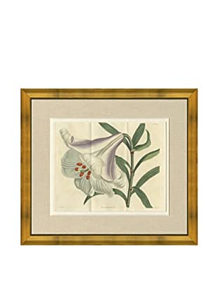 1813 Antique Hand Colored White & Lavender Botanical, French Mat