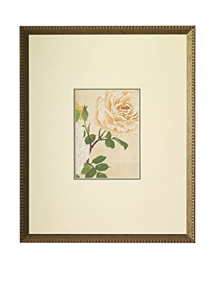 1918 Botanical Japanese Woodblock Roses