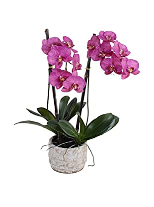 New Growth Designs Faux Phalaenopsis Orchid, Fuchsia