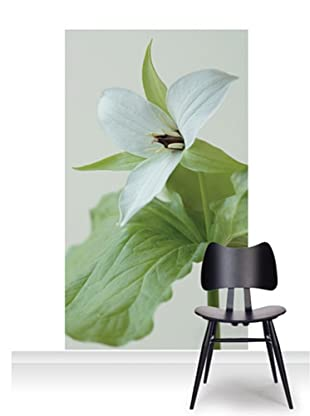 Clive Nichols Photography The White Flower of Trillium Simile Standard Mural (Accent)