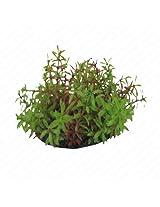 Small Plants Jungle