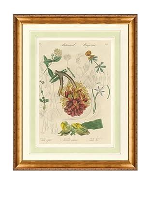 1837 Antique Hand Colored Orange Botanical Print III, French Mat