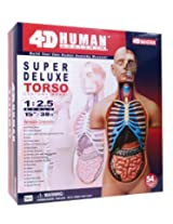 Tedco Human Anatomy - Deluxe Torso