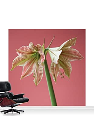 Clive Nichols Photography Exotic Star Mural, Standard, 8' x 8'
