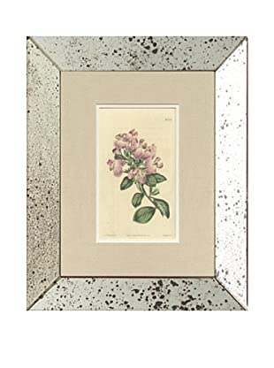 1813 Antique Hand Colored Pink Botanical V, Mirror Frame