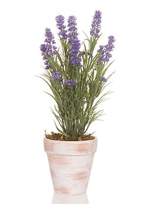 Concoral Maceta 9 flores de lavanda