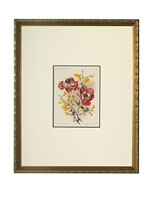 1920 Les Fleurs a l'Aquarelle Anemones