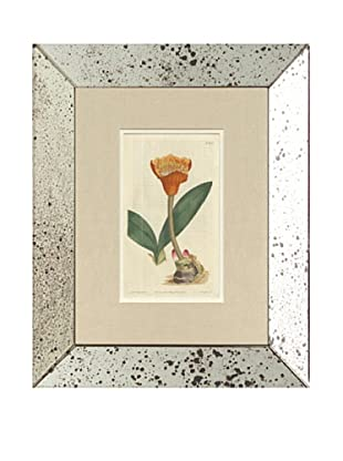 1813 Antique Hand Colored Orange Botanical, Mirror Frame