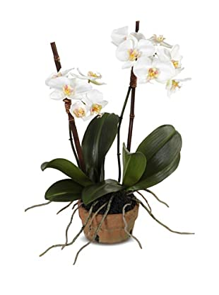 New Growth Designs Small Faux Phalaenopsis Orchid, White