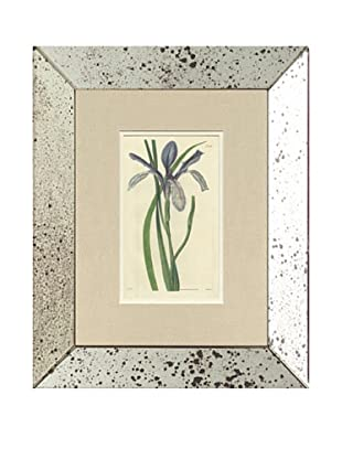 1824 Antique Hand Colored Lavender Botanical, Mirror Frame