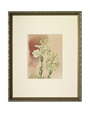 1903 Lily Botanical Chromolithograph